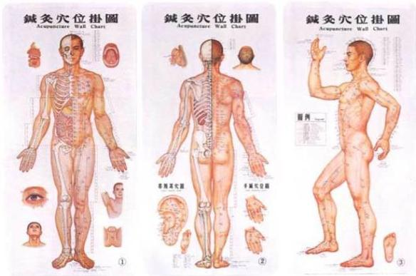 Chart of Acupuncture points on male body