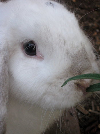 Maddie, the rabbit